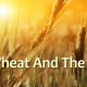 Is the furnace of fire in Matthew 13:40-42 a reference to hell?