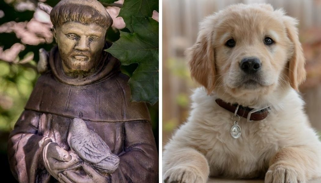 How pets can aid us in becoming more Christlike…