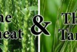 The Parable of the Wheat and the Tares (Matthew 13:24-30)