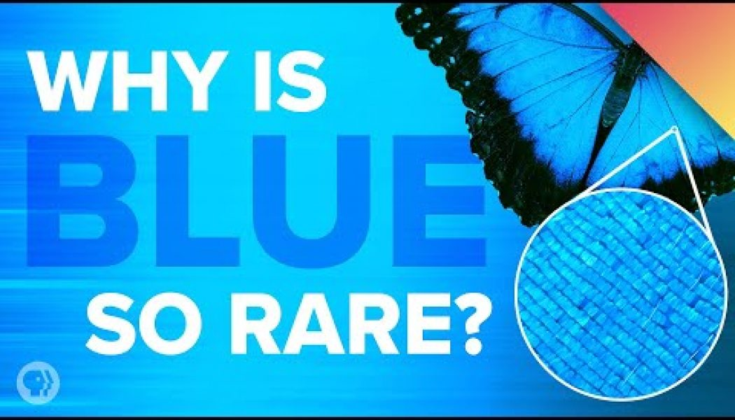 """Why is blue so rare in nature? Why didn't ancient people """"see"""" blue? And why does Japan's blue look green to everyone else?"""