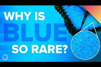 "Why is blue so rare in nature? Why didn't ancient people ""see"" blue? And why does Japan's blue look green to everyone else?"