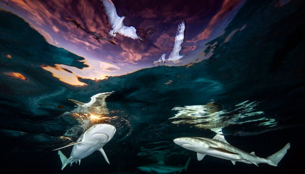 The winners of the 2021 Underwater Photographer Of The Year contest are breathtaking…