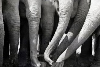 Here's one more reason to admire elephant trunks: They can inhale air at speeds of more than 335 miles per hour…