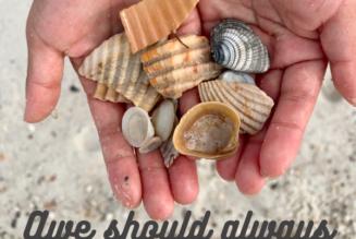 Shells of Wonder